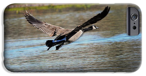 Geese iPhone Cases - Goose in Flight 2 iPhone Case by Jai Johnson