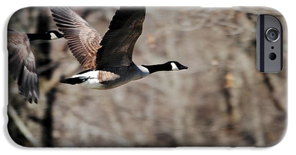 Geese iPhone Cases - Goose in Flight 3 iPhone Case by Jai Johnson