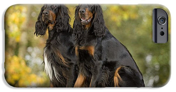 Gordon Setter iPhone Cases - Gordon Setters iPhone Case by Jean-Michel Labat