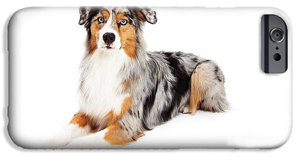 Domestic Animal iPhone Cases - Gorgeous Australian Shepherd Dog Laying iPhone Case by Susan  Schmitz
