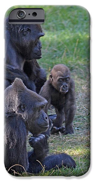 Bonding iPhone Cases - Gorilla Family Relaxing Together iPhone Case by Jim Fitzpatrick