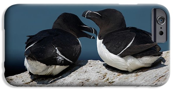 Razorbill iPhone Cases - Gossip Mongers iPhone Case by Brent L Ander