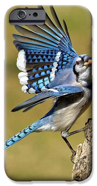 Bluejay iPhone Cases - Gotta Go iPhone Case by Bill  Wakeley