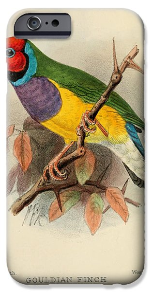 Finch iPhone Cases - Gouldian Finch iPhone Case by J G Keulemans