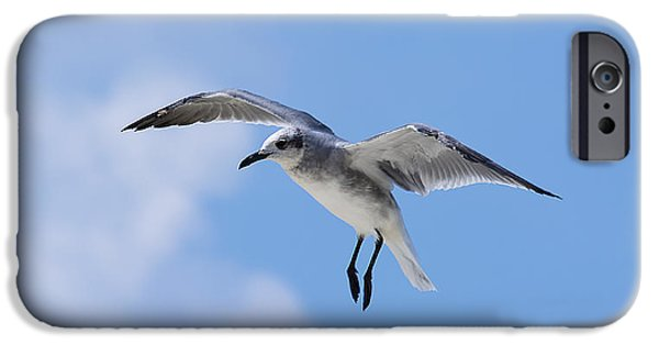 Flying Seagull iPhone Cases - Grace in Flight iPhone Case by Kenneth Albin