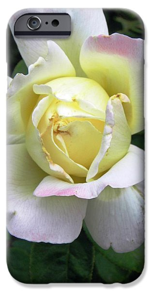 Blooming Pyrography iPhone Cases - Graceful Beauty iPhone Case by Andrew  Stoffel