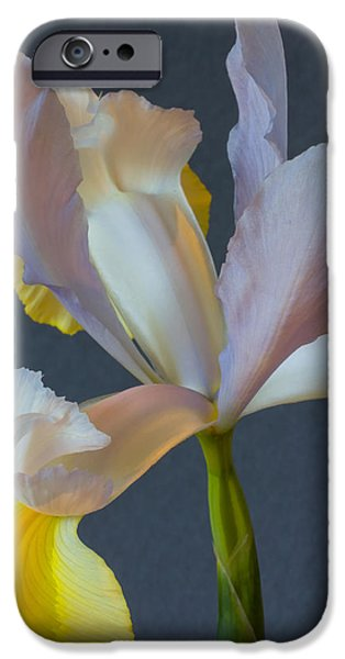 Xiphium iPhone Cases - Graceful iPhone Case by Heidi Smith