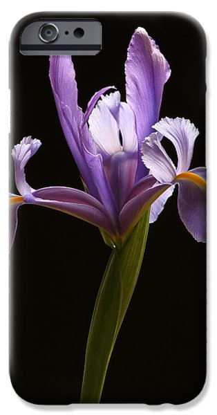 Purple Sensation iPhone Cases - Graceful Iris iPhone Case by Juergen Roth