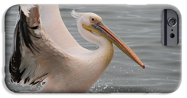 For Busines iPhone Cases - Graceful landing iPhone Case by Taschja Hattingh