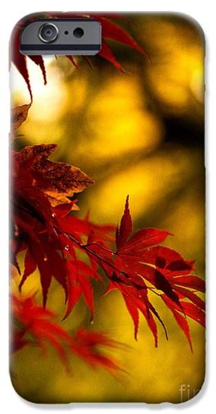 Graceful iPhone Cases - Graceful Leaves iPhone Case by Mike Reid