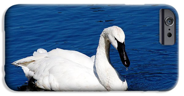 Swans... iPhone Cases - Graceful Swan iPhone Case by Rebecca Cozart