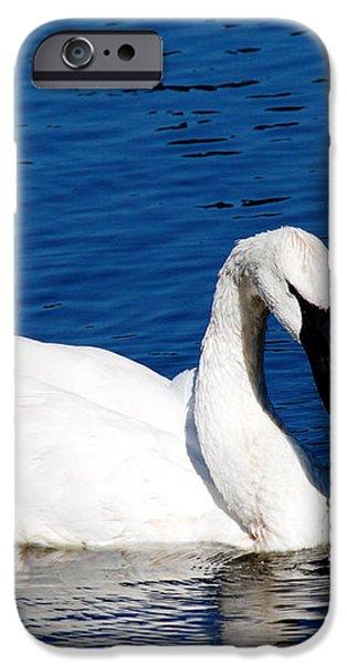 Graceful Swan iPhone Case by Rebecca Cozart