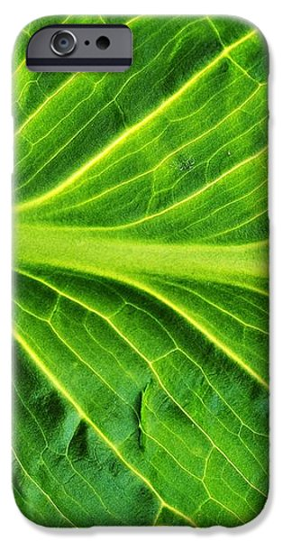 graceful iPhone Case by Tom Druin