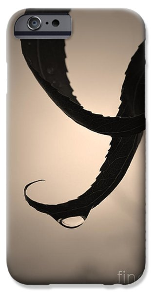 Monotone iPhone Cases - Gracefully iPhone Case by Tara Turner