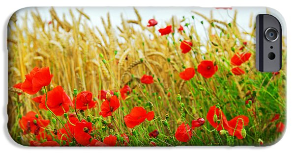 Fields iPhone Cases - Grain and poppy field iPhone Case by Elena Elisseeva
