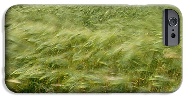 Crops iPhone Cases - Grain Field In Wind, Near Lorelei iPhone Case by Panoramic Images