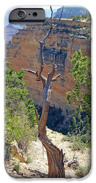 Nature Study iPhone Cases - Grand Canyon Deadwood Study 4 iPhone Case by Robert Meyers-Lussier