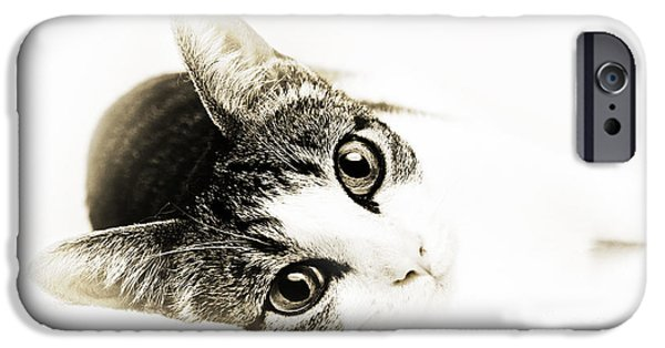 Purebred Digital Art iPhone Cases - Grand Kitty Cuteness 3 High Key iPhone Case by Andee Design