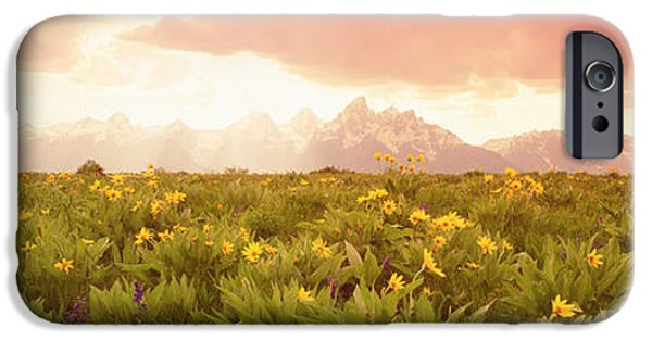 Meadow Photographs iPhone Cases - Grand Teton Park, Wyoming, Usa iPhone Case by Panoramic Images