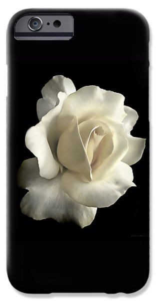 Grandeur Ivory Rose Flower iPhone Case by Jennie Marie Schell