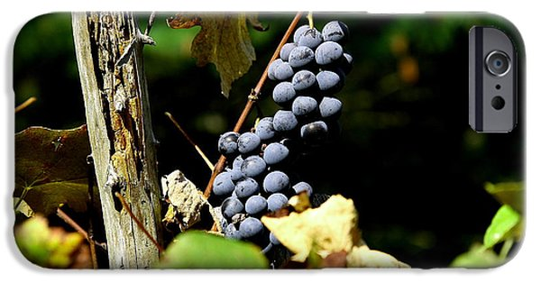 Fruit On The Vine Print iPhone Cases - Grape Harvest iPhone Case by Neal  Eslinger