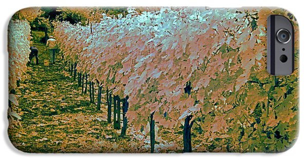 Grapevine Red Leaf iPhone Cases - Grape Harvest, Umbria, Italy iPhone Case by Tim Holt