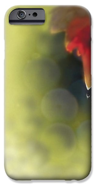 Grape Leaf Water Drop iPhone Case by Kume Bryant