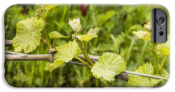 Grapevine Red Leaf iPhone Cases - Grape Leaves in Early Spring iPhone Case by Jean Noren