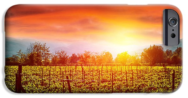 Grapevine Red Leaf iPhone Cases - Grape valley in sunset iPhone Case by Anna Omelchenko