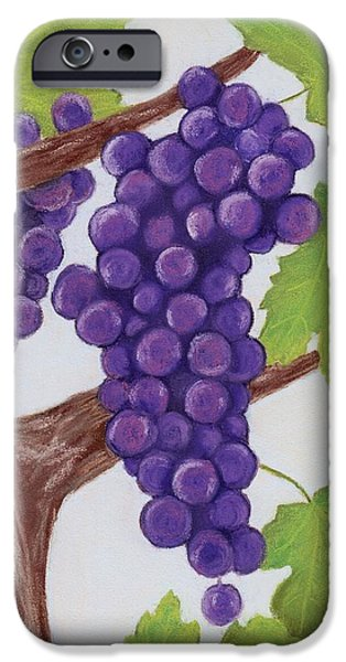 Plant Pastels iPhone Cases - Grape Vine iPhone Case by Anastasiya Malakhova