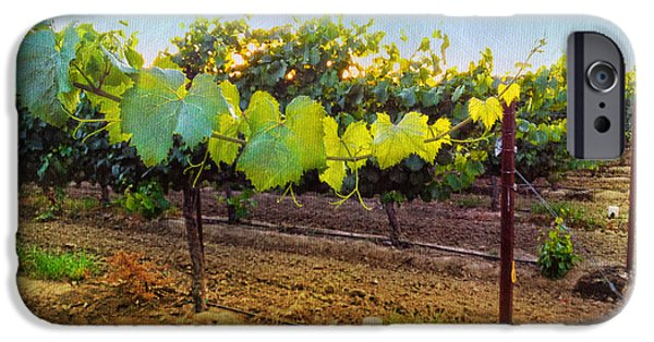 Grape Vine iPhone Cases - Grape Vine in the Vineyard iPhone Case by Shari Warren