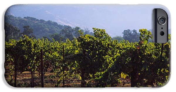 Vineyard In Napa iPhone Cases - Grape Vines In A Vineyard, Napa Valley iPhone Case by Panoramic Images