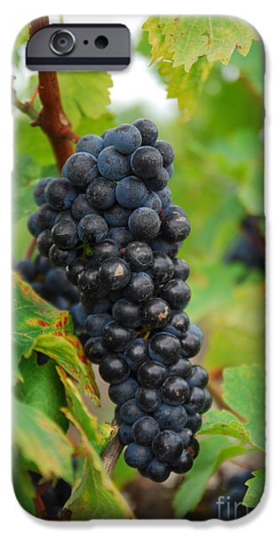 grapes iPhone Case by Hannes Cmarits