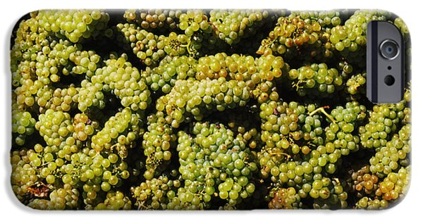 Winery Photography iPhone Cases - Grapes In A Vineyard, Domaine Carneros iPhone Case by Panoramic Images