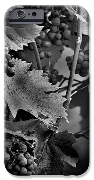 Metal Vineyard Print iPhone Cases - Grapes iPhone Case by Michael Pinette