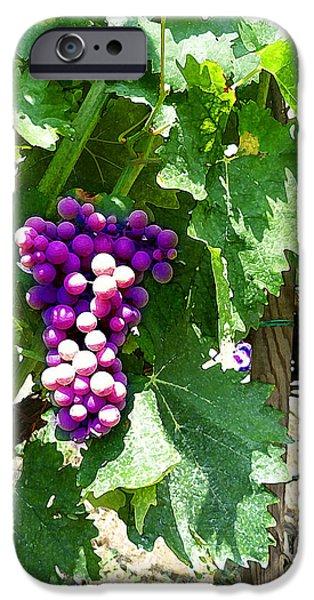 Grapes iPhone Cases - Grapes Of Tuscany Italian Winery  iPhone Case by Irina Sztukowski