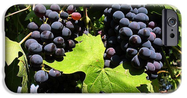 Red Wine iPhone Cases - Grapes On A Vine iPhone Case by Tim Holt