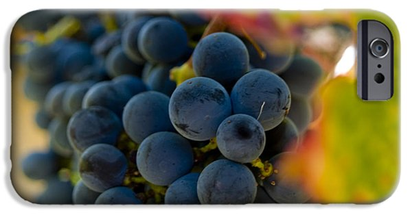 Agriculture iPhone Cases - Grapes On The Vine iPhone Case by Bill Gallagher
