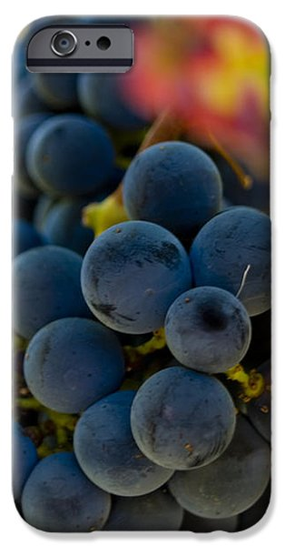 Grapes On The Vine iPhone Case by Bill Gallagher