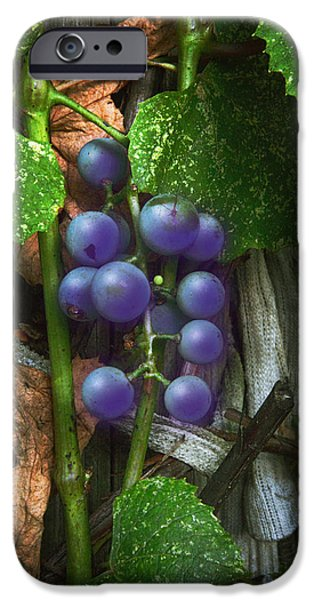 Concord Digital Art iPhone Cases - Grapes On The Vine iPhone Case by Brian Wallace