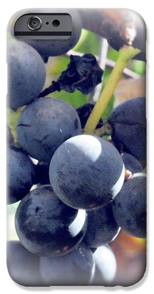 Grapes On The Vine iPhone Case by Kathleen Struckle