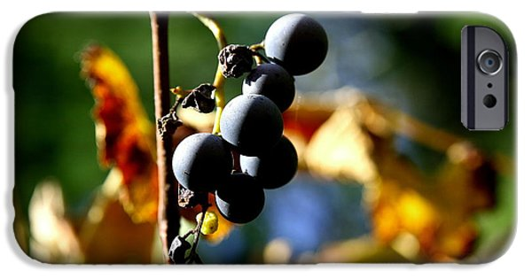 Fruit On The Vine Print iPhone Cases - Grapes on the Vine No.2 iPhone Case by Neal  Eslinger