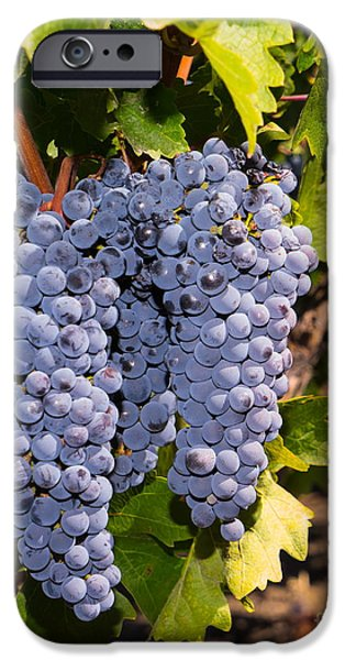 Vineyard In Napa iPhone Cases - Grapes on The Vines in The St Helena Vineyards Napa California DSC1729 vertical iPhone Case by Wingsdomain Art and Photography