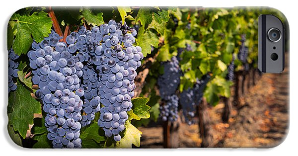 Vineyard In Napa iPhone Cases - Grapes on The Vines in The St Helena Vineyards Napa California DSC1729 iPhone Case by Wingsdomain Art and Photography