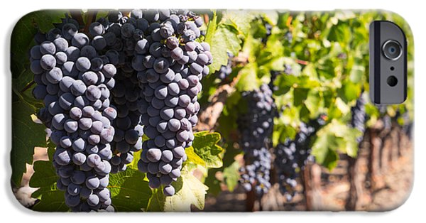 Vineyard In Napa iPhone Cases - Grapes on The Vines in The St Helena Vineyards Napa California DSC1731 iPhone Case by Wingsdomain Art and Photography