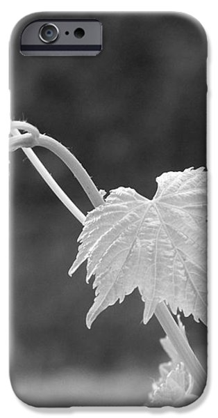 Grapevine  iPhone Case by Heather L Giltner