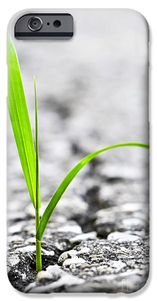 Asphalt iPhone Cases - Grass in asphalt iPhone Case by Elena Elisseeva