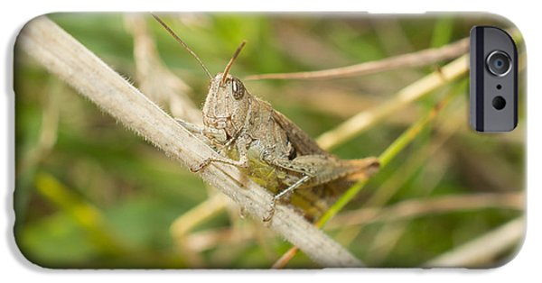 Nature Photographs iPhone Cases - Grasshopper iPhone Case by Robert Carr