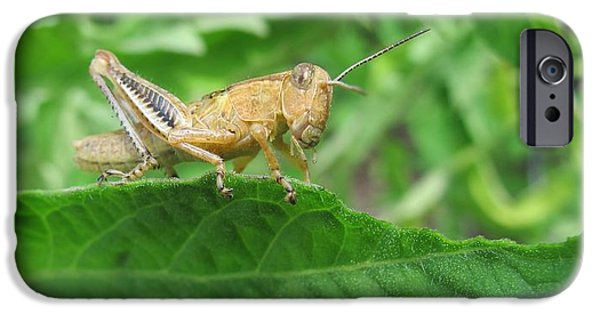 Bugs Pyrography iPhone Cases - Grasshopper iPhone Case by Valia Bradshaw