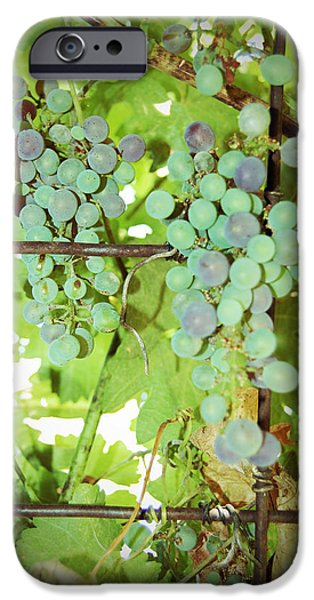 Grated Grapes iPhone Case by Holly Blunkall